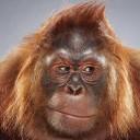 JKUGELMAN forum's avatar