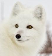 PADRAIC forum's avatar
