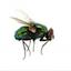 TERRA AUSTRALIS forum's avatar