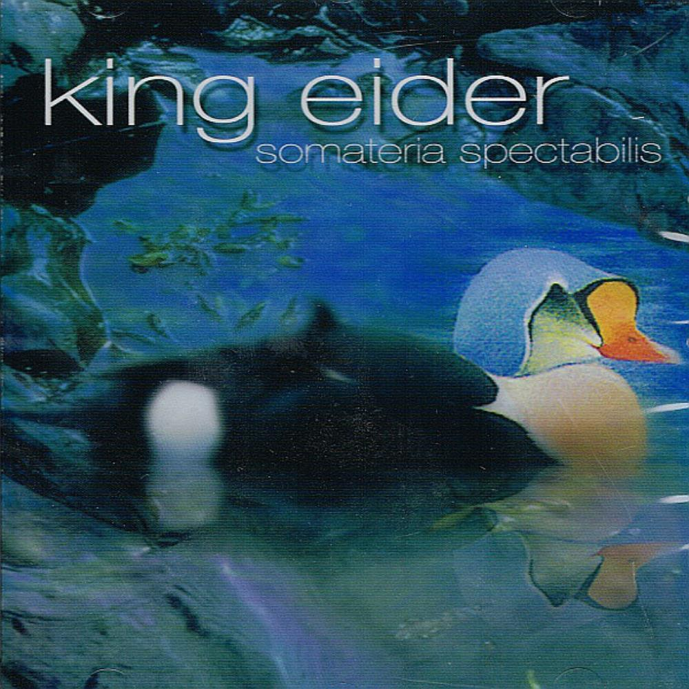 King Eider - Somateria Spectabilis CD (album) cover