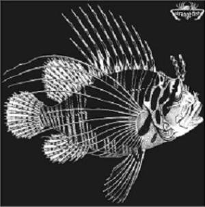 Various Artists (Concept albums & Themed compilations) Strange Fish Three album cover