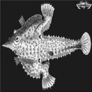 Various Artists (Concept albums & Themed compilations) Strange Fish Four album cover