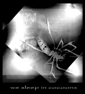Ingenium We Sleep in Cocoons album cover