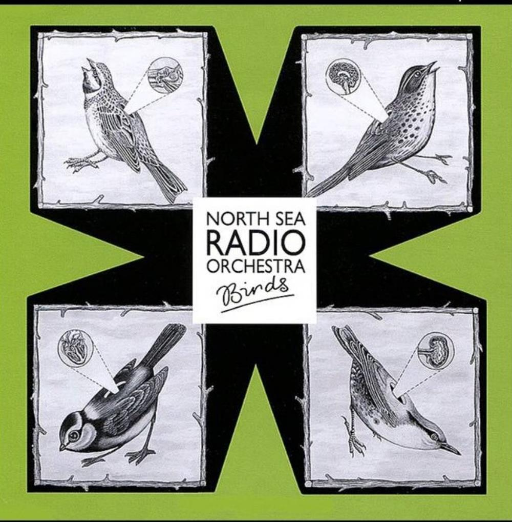 Birds by NORTH SEA RADIO ORCHESTRA album cover