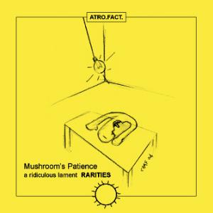 Mushroom's Patience - A Ridiculous Lament Rarities CD (album) cover