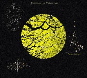 Animal Cerámico by NICOTINA ES PRIMAVERA album cover